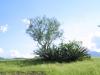 Asparragaceae - Agave angustifolia - Rancho San Francisco IMG_0380