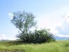 Asparragaceae - Agave angustifolia - Rancho San Francisco IMG_0381