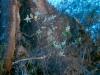 Amaranthaceae - Iresine calea Explorar791