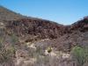 Arecaceae - Sabal uresana - San Vicente P0001220