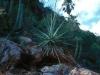 Asparragaceae - Agave chrysoglossa - Los Anegados Explorar229